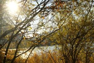 Fuschl im Herbst